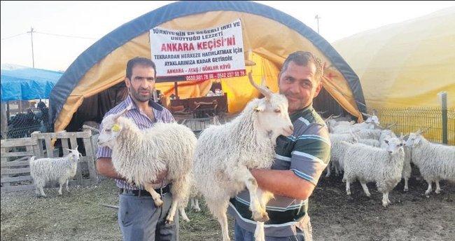 Pazarın gözdesi Ankara Keçisi