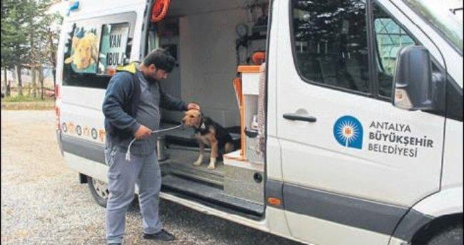 Ölüme terk edilen köpekler kurtarıldı