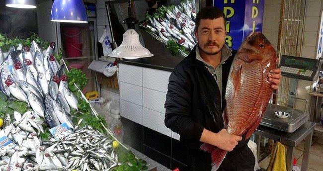 Oltayla 10 kiloluk mercan balığı yakaladı