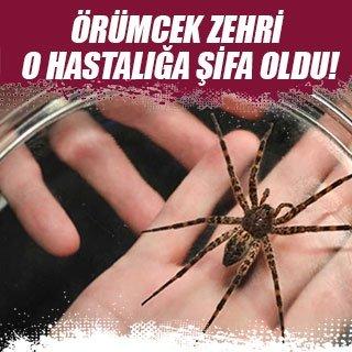 Örümcek zehri o hastalığa şifa oldu!