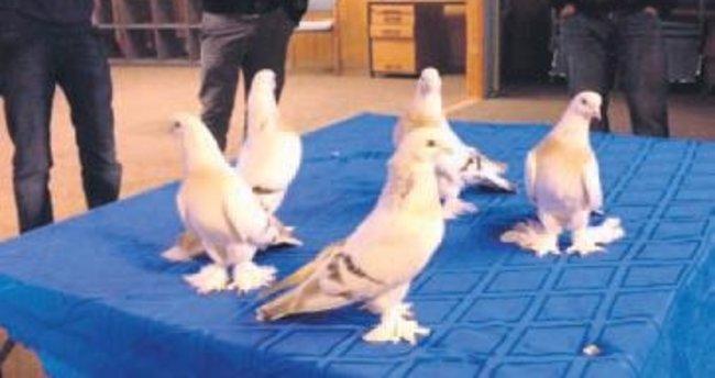 Güvercin Festivali'ne ev sahipliği yapacak