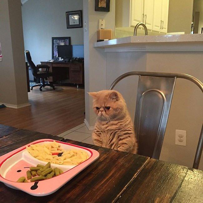 İnsan gibi davranan kedi