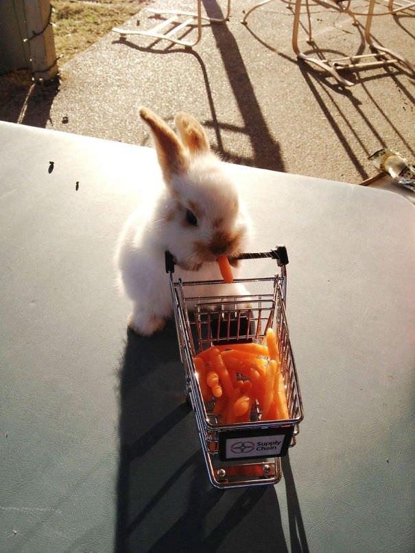 Sevimli Tavşanlar