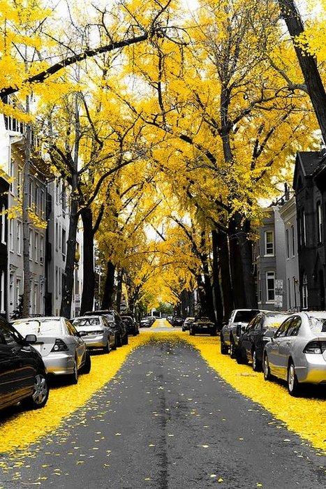 Büyüleyici 15 sokak