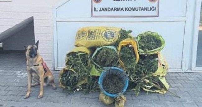 86,5 kilo esrar ele geçirildi