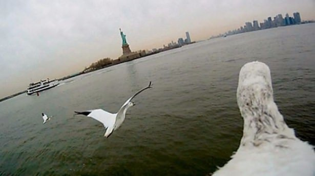 Kuşların gizemli yolculukları
