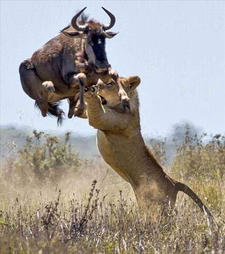 Hayvanların ölüm kalım mücadelesi