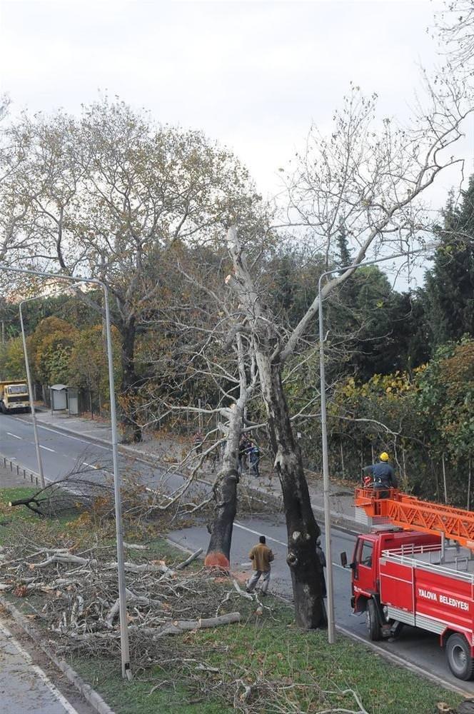 Kavşak için 158 ağaç