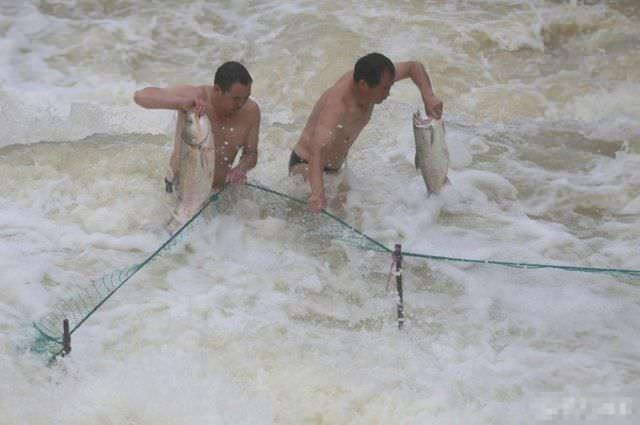 Her şey balık için