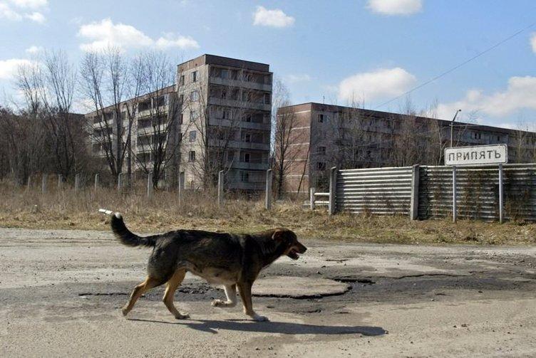 Çernobil'in izleri