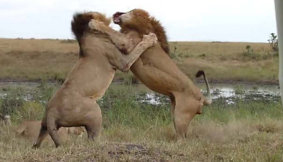 Hayvanlar aleminden en vahşi saldırılar