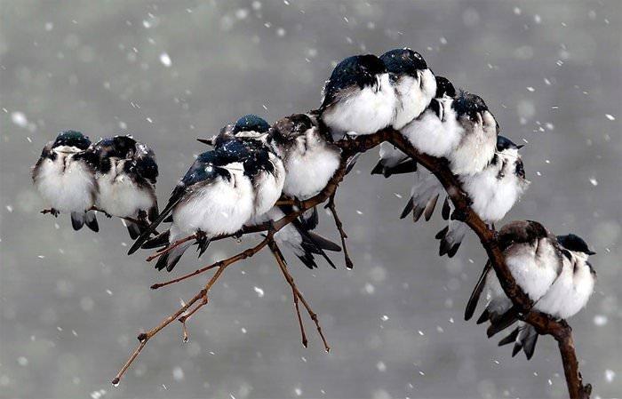 Dünyanın en şirin kuşları!
