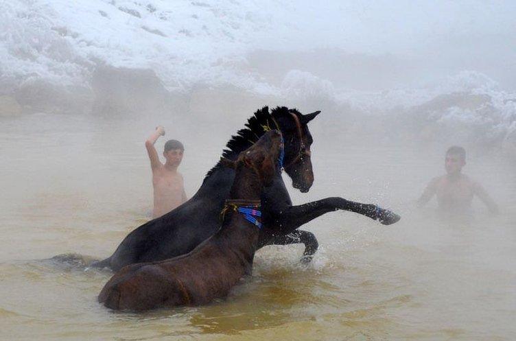 Manda ve atların kaplıca keyfi