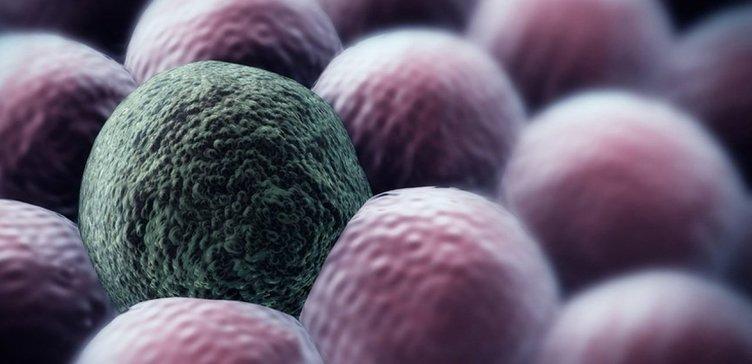 Kanserli hücrelerin oluşmasını engelliyor!