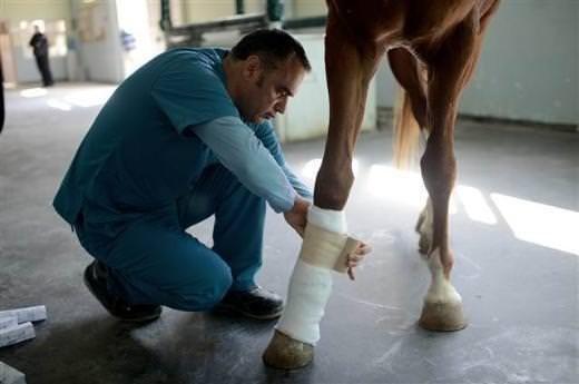 Yarış atları için özel hastane