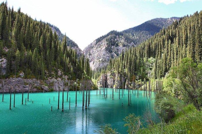 Kazakistan'ın su ağaçları