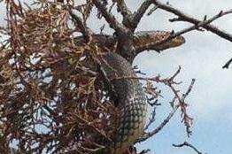 6 metrelik yılan korku dolu anlar yaşattı