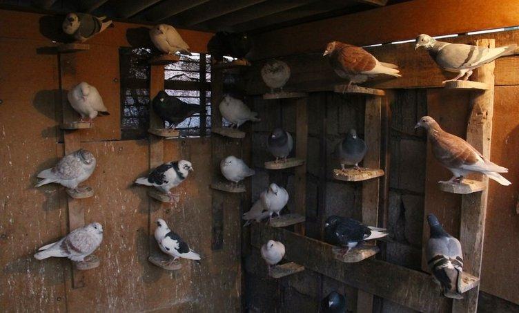 Şanlıurfa'da kuş kapma yarışması