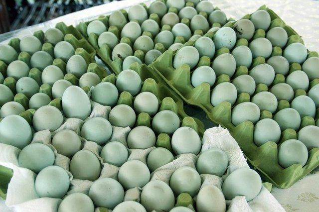 Yeşil yumurta üreten kadın taleplere yetişemiyor!