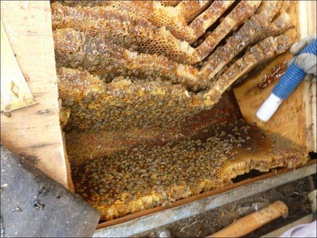 Arıların istilası
