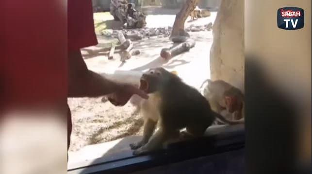 Maymunun sihirbazlık gösterisine verdiği tepki