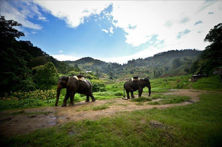 Tayland'ın simgesi: filler