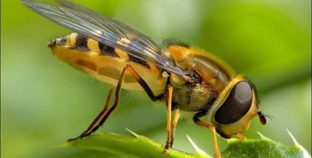 Türkiye için tehlikeli arıları yurda sokmaya çalışırken yakalandılar.
