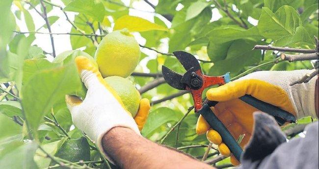 Ulupınar organik tarım merkezi oldu