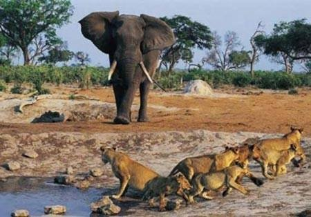 Vahşi doğanın acımasızlığı!