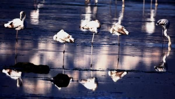 Flamingolardan tablo gibi manzara
