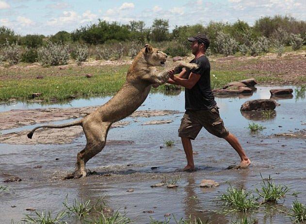 Aslanın inanılmaz vefası