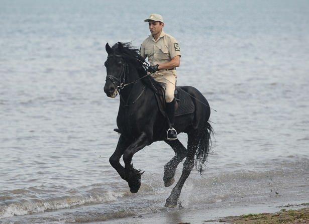 Türk Silahlı Kuvvetlerinin atları böyle eğitiliyor