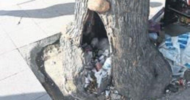 Asırlık ağaçlara çöp kutusu muamelesi