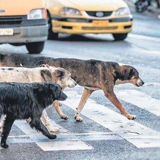 Sokak köpekleri emekli profesörü öldürdü