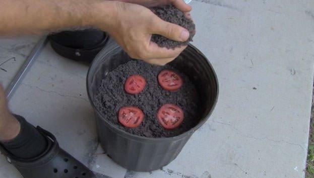 Sakın ezik domatesleri atmayın!