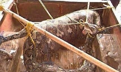 Bu yılanlar çok tehlikeli