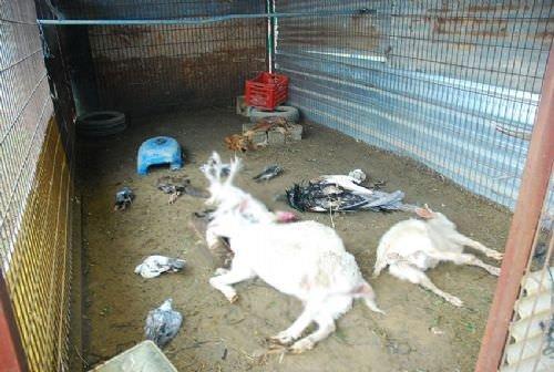 Manavgat'ta hayvanlar telef oldu