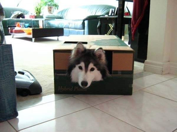 Kedilerin yetiştiği köpek