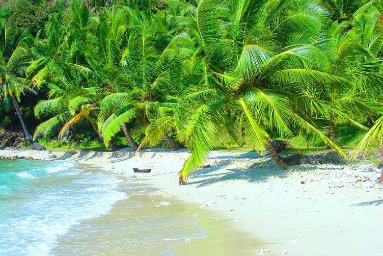 Parfüm adaları etrafa koku saçıyor
