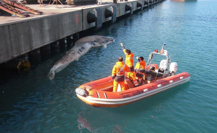 Hatay İskenderun'da ölü balina bulundu