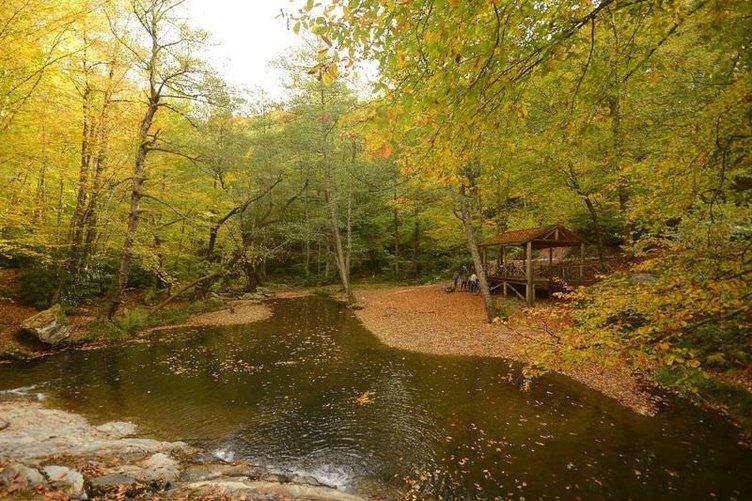 Longoz Ormanları'nda sonbahar güzelliği