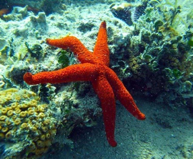 İzmir Körfezi'ndeki canlı sayısında sevindiren artış