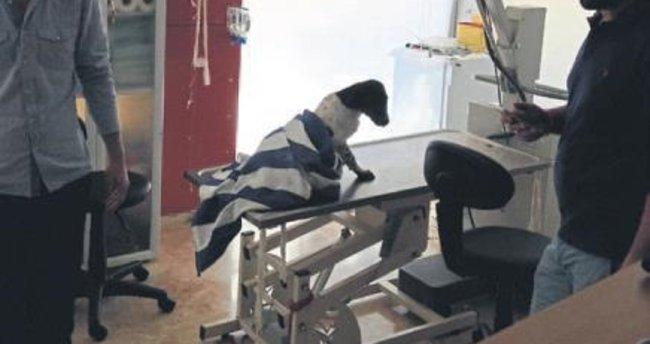 Yaralı köpeğe büyükşehir şefkati