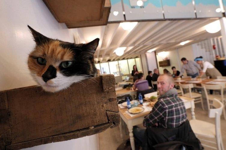 Kedilere özel kafe