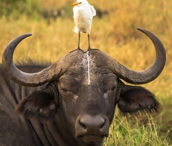2016'nın en komik hayvan fotoğrafları