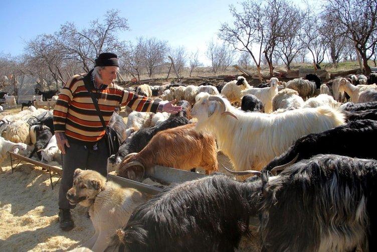 63 yaşındaki üniversiteli çobanın azmi