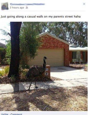 Bunlar sadece Avustralya'da görülüyor!