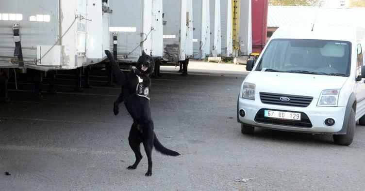 Narkotik köpeği 'Dark', 181 kök keneviri yakalattı