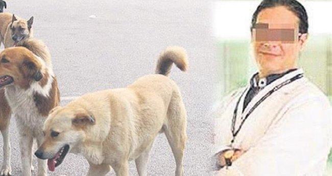 Profesör bir sokak köpeğini bıçakladı