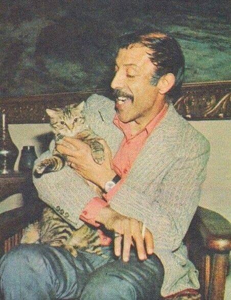Onlar kedilere aşık!